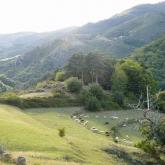 Vue du gîte sur le troupeau de moutons